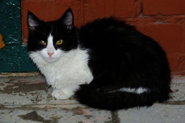 Чернушка очень ласковая  и дружелюбная кошка. У нее немного травмирован правый глаз, но зрение сохранено. Куратор  Надежда: 8-927-531-93-43.