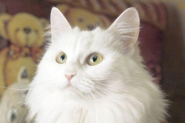 Снежану нашли беременной на остановке под проливным дождем в Волжском. Котят благополучно пристроили в добрые руки – теперь настала очередь и для мамы. Куратор Наталья: 8-917-836-29-47.