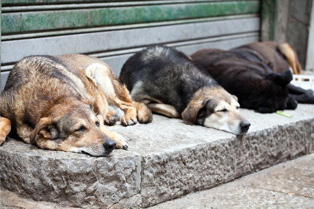Ветеринары Челябинска объявляют охоту на бродячих собак и кошек