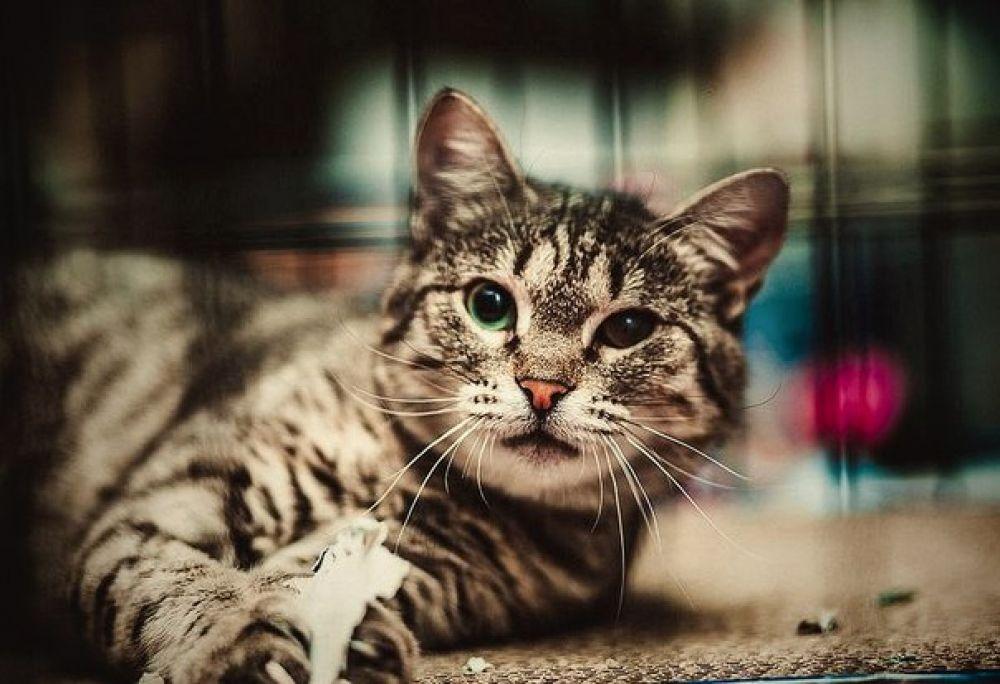 Кошечка Заводик. Очень ласковая. У нее иммунодефицит, поэтому только единственной кошкой в семью и только в квартиру. Телефон куратора 8-961-290-63-73