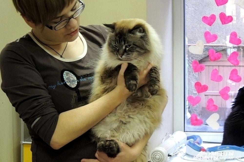 У невского маскарадного кота есть маска и перчатки.