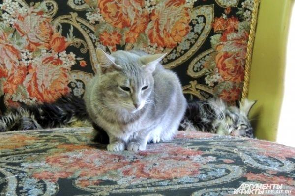 Кошки любят отдыхать в большом кресле.