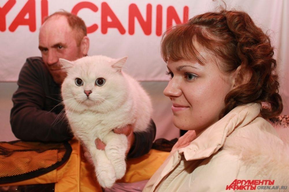 На выставке с котами можно абсолютно бесплатно сфотографироваться.