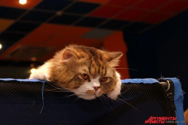 Выставочный день по-кошачьему длится очень долго.