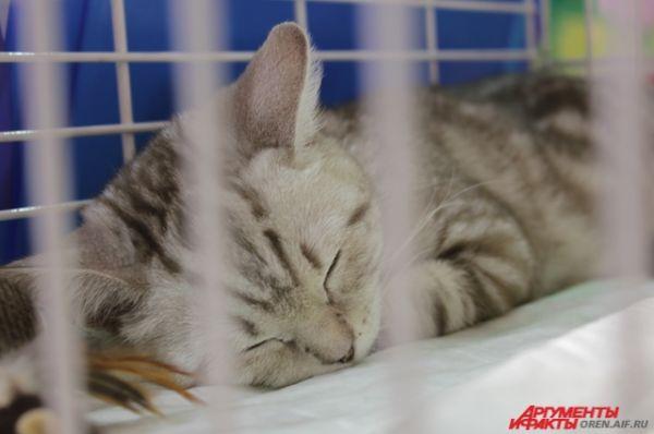 Нет ничего милее спящего кота.