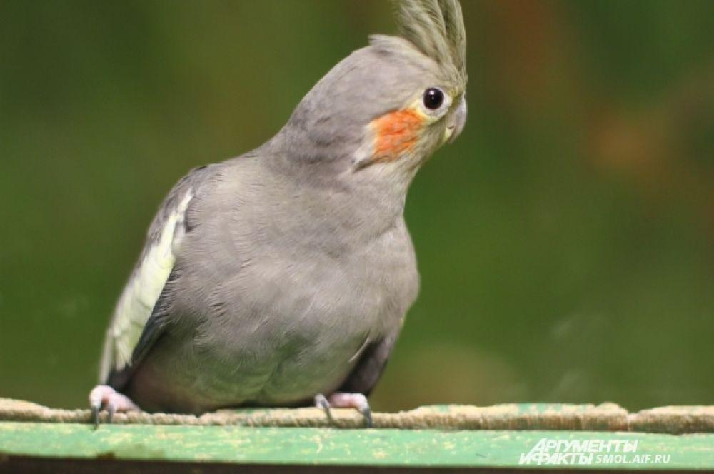 Птицы весной, как правило, становятся более шумными и крикливыми.