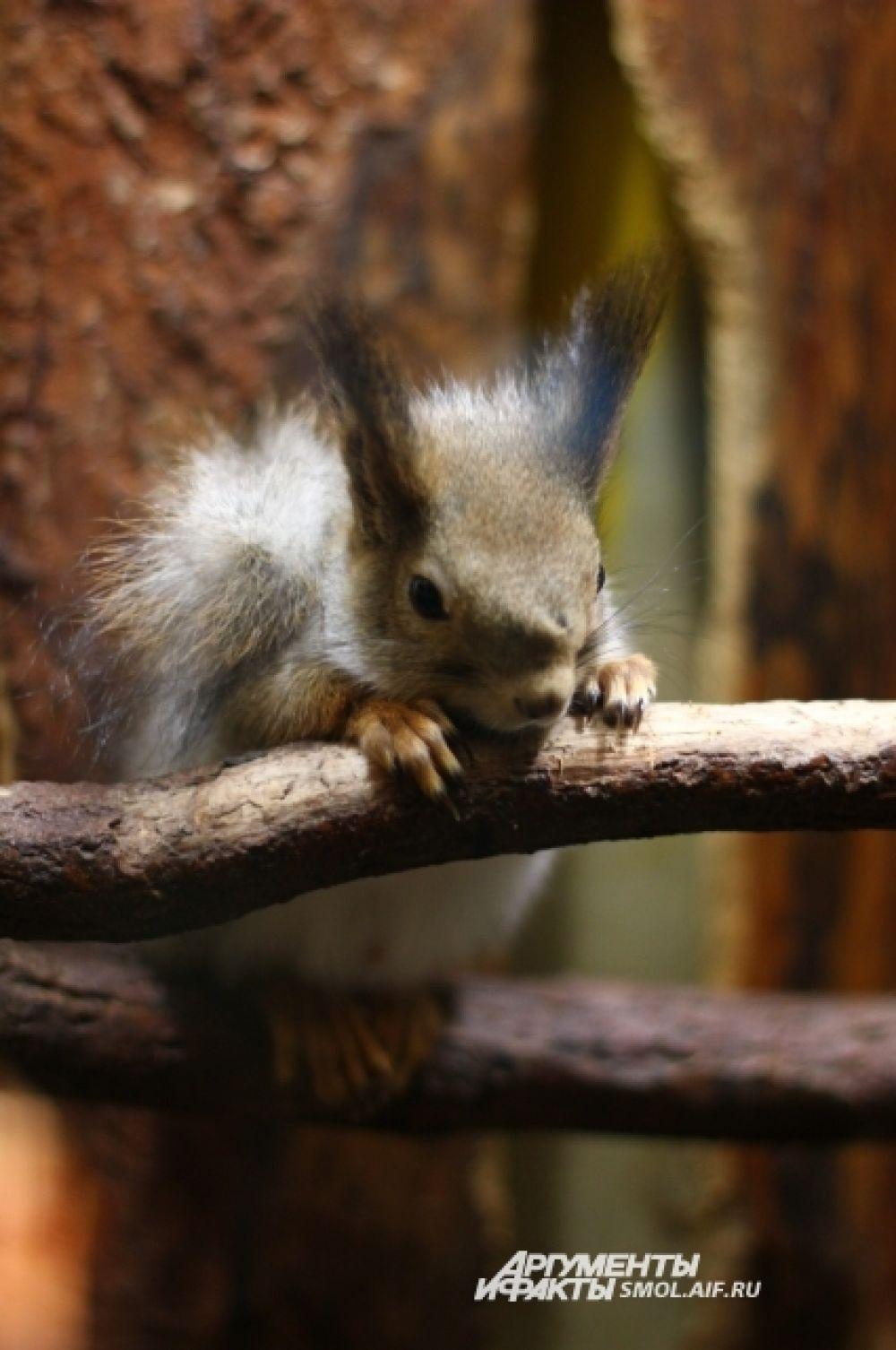 Спускаясь с деревьев после зимы, белки часто начинают собирать новые запасы - например, шишки, сброшенные птицами.
