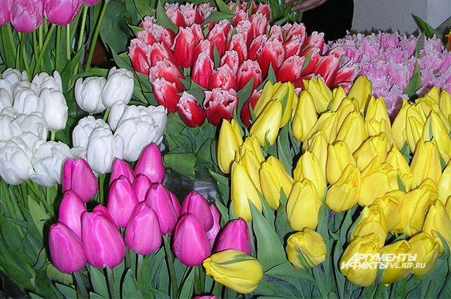 Приморские тюльпаны радуют глаз и расцветками и формой.