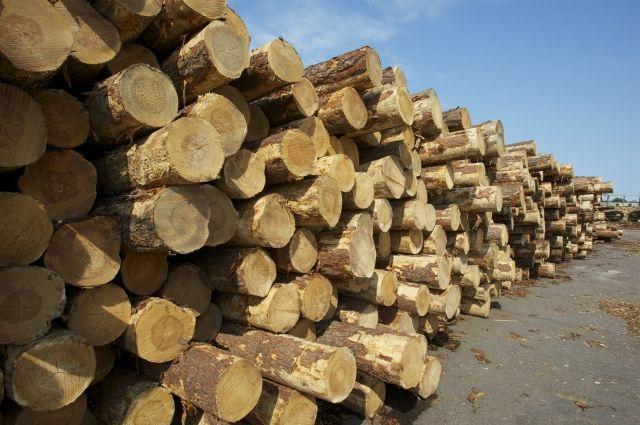 Завод по изготовления ОСП может появиться в Омской области.