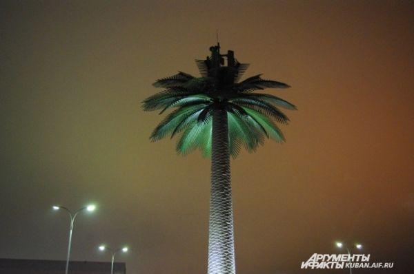 Гигантская пальма у входа в Олимпийский парк.