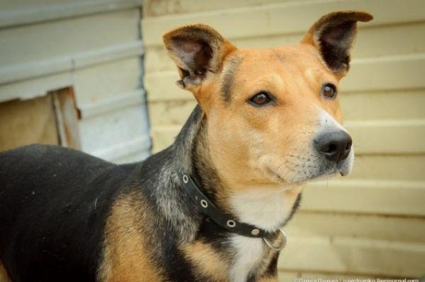 Хозяевам Джульетты на рынке сказали, что они покупают щенка стаффордширского терьера. Когда Джульетта выросла, стало видно, что их обманули, и они выбросили собаку на улицу.