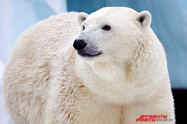 Воспитывать детеныша Герда вынуждена без Кая. Отца отселили, поскольку в дикой природе самцы белых медведей иногда нападают на молодняк.