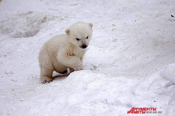 А вот медвежонок в одиночестве немного теряется.