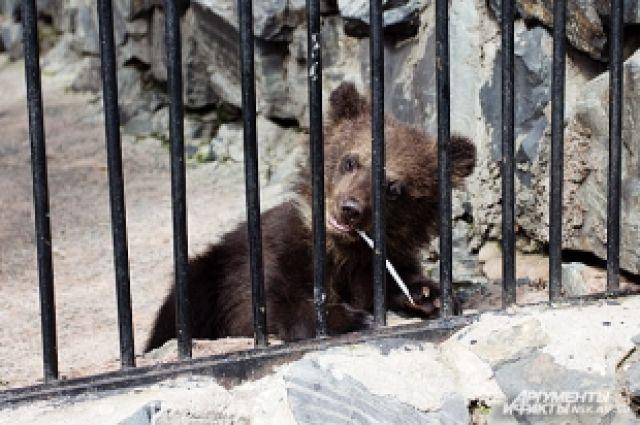 Медведи могут проспать от 2, 5 месяцев до полугода.