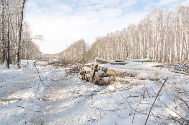 Бесконтрольная вырубка лесов - нередкость для Ярославской области.