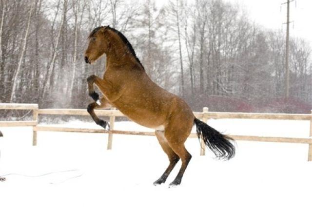 В Омске возможно построят новый конный центр.