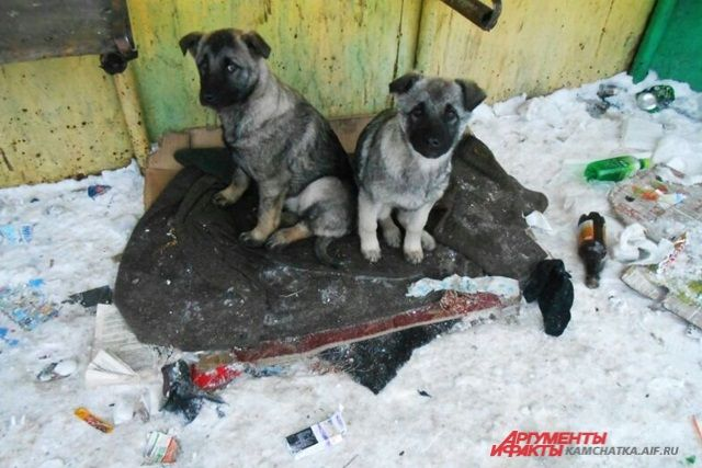 Выжившие щенки.
