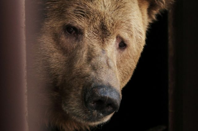 В зоопарке Екатеринбурга просыпаются медведи
