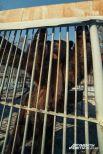 Отец Симы и Сёмы, медведь по имени Миша. В нем полтора человеческих роста.