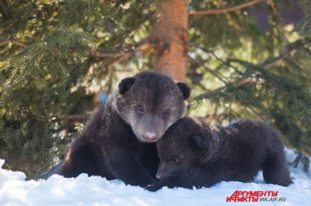Недолгое время на снегу и Сима с Сёмой начинают реветь.