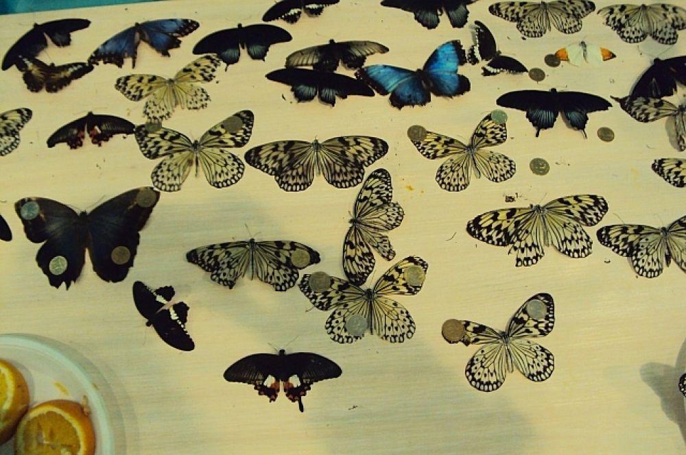 Погибших насекомых отдают для гербария любителям или специалистам.