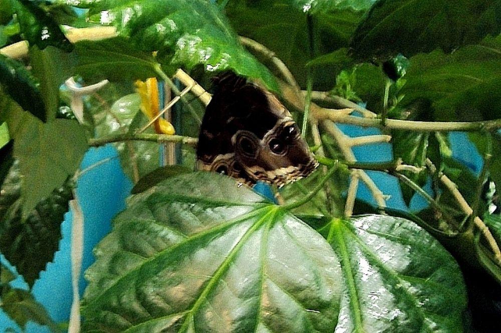Ещё одна красавица притаилась в импровизированных джунглях