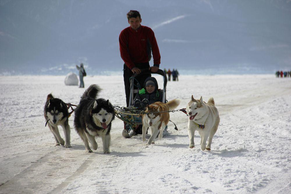 Тут же можно было прокатиться на собачьих упряжках.