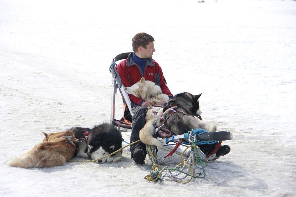 Пока участники развлекались, собаки отдыхали.