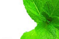 Базилик и розмарин дома: выращивание и использование