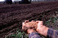 Элитные семена на 20% дороже обычных.