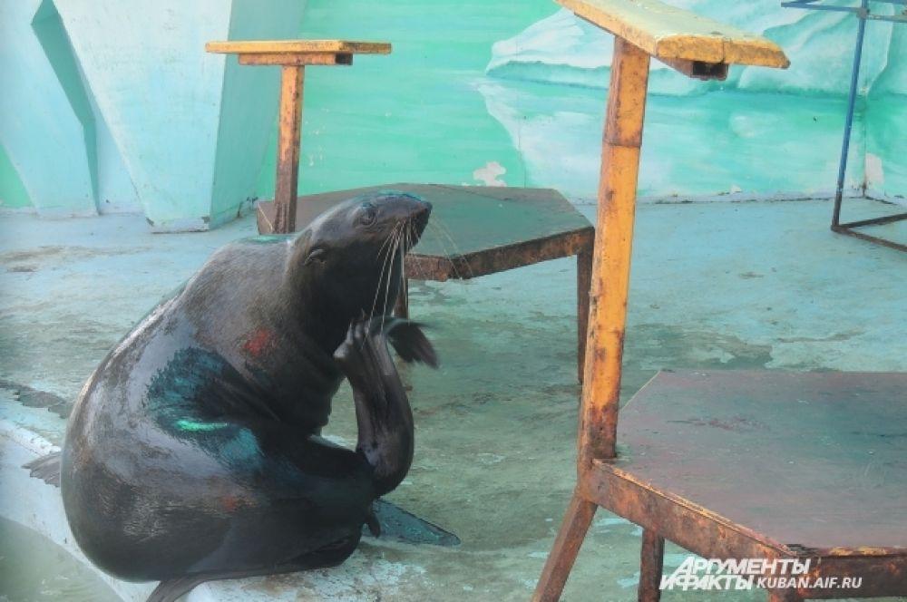 Морской котик греется на солнышке.