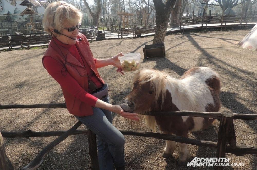 Лошадку кормят с рук – в интересном положении у нее прекрасный аппетит.