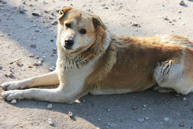 В столице Урала может появиться бэби-бокс для бездомных животных