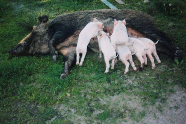 Машка и ее дети.