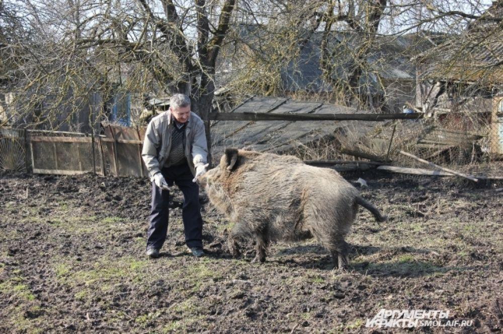 Владимир Иванович выгуливает свою любимицу, как собаку.