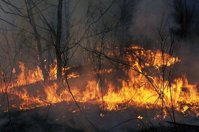 В суботу у Голопристанському районі згоріло 15 соток лісу
