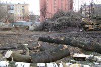 Деревья помешали новой стройке.