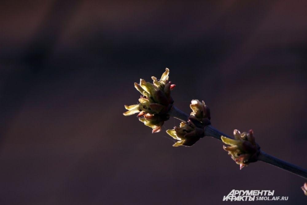 Тепло поторопило не только цветы на клумбах - кустарники и деревья тоже начинают цвести.