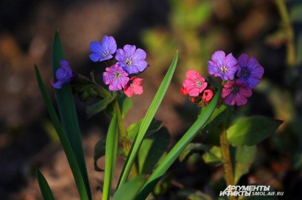 Первоцветами считают цветы, которые первые тянутся к солнцу и расцветают ранней весной, чаще - в апреле.