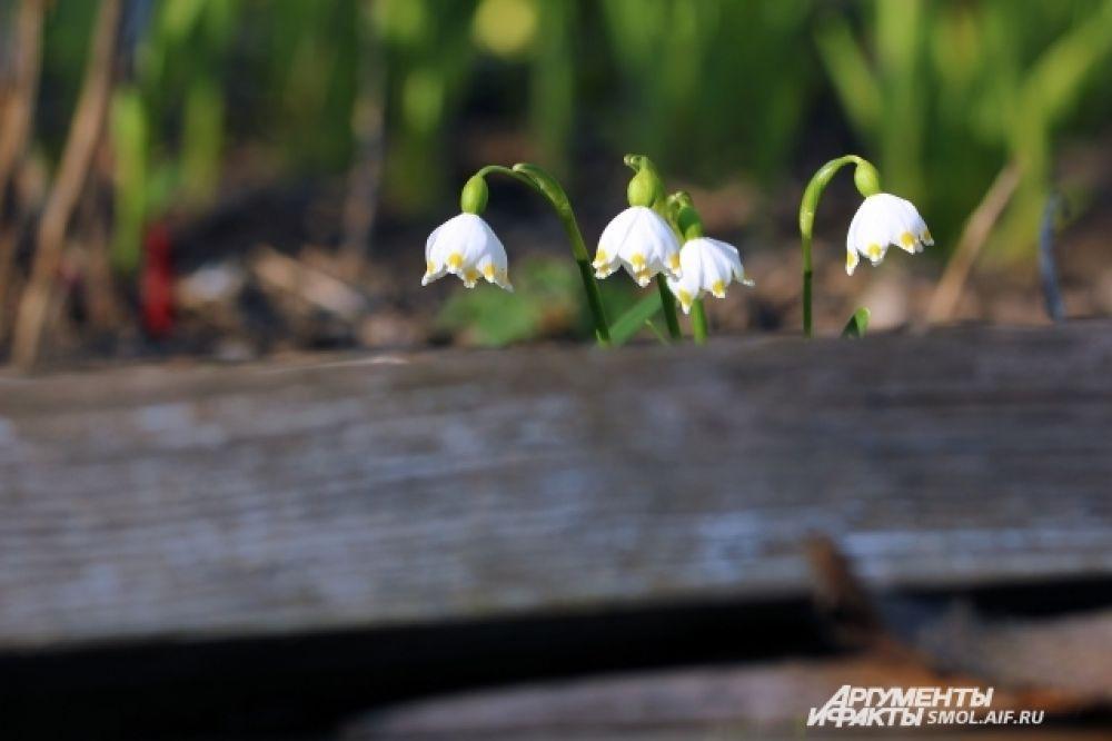 Ландыши - еще один символ весны.
