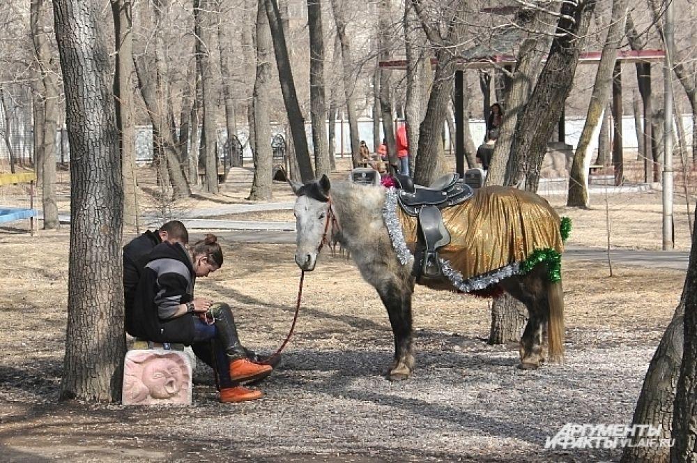 Любит детвора и пони, так что простаивает лошадка редко.