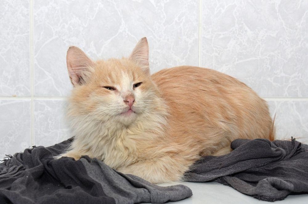 Персик – настоящий диванный кот. Любит ласку и «обнимашки». Куратор:  8-927-531-93-43