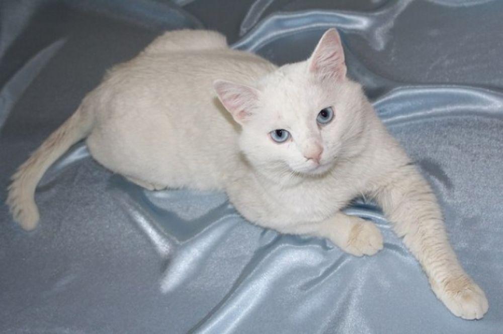 Мишке 1,5 года. Он добродушный, спокойный и вальяжный кот. Его любимое занятие – спать. Куратор Юлия: 8-917-845-49-73