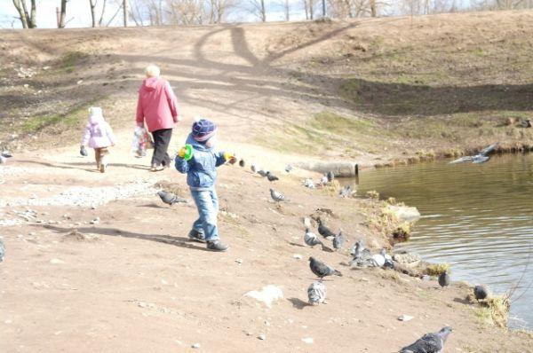 Дети очень любят дендропарк, где привыкшие к людям птицы могут подойти очень близко к ребенку.