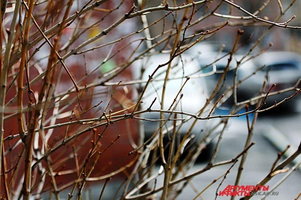 Реальные даты наступления весны опережают календарный график погодных изменений на две-три недели