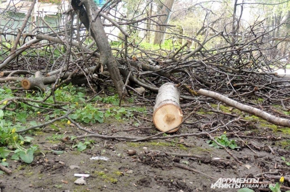 До сих пор не весь мусор убрали после январской непогоды.