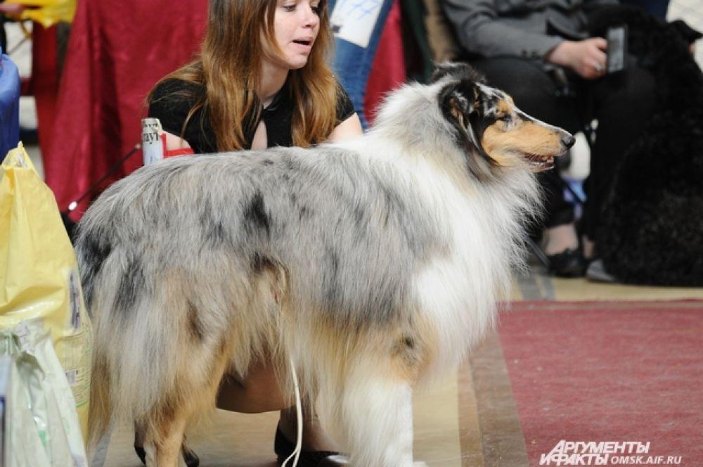 Всероссийская выставка собак прошла в Омске.