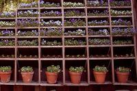 На цветочной выставке можно будет увидеть уникальные виды растений.