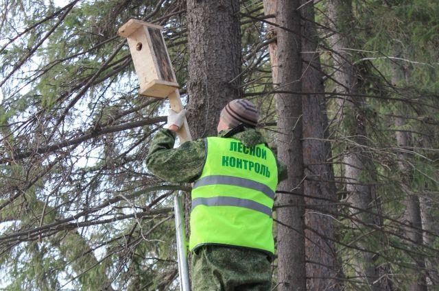 В Омской области ждут прилёта птиц.