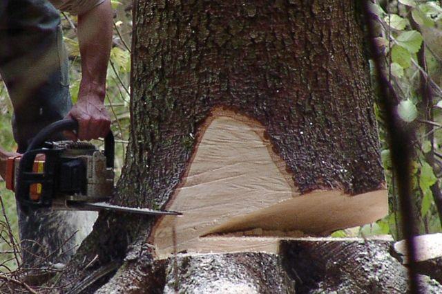 Незаконная рубка леса привела к трагедии.